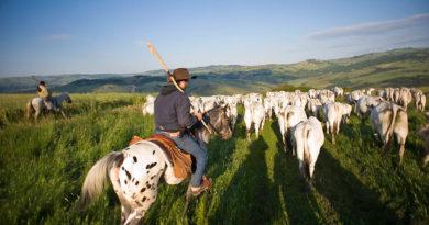 Transumanza patrimonio Unesco, Merla: «Occasione storica per valorizzare le nostre tradizioni»