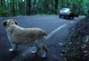 On. Lovecchio (M5S): pene più severe per chi maltratta  gli animali