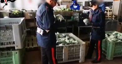 """Operazione """"Anticaporalato"""" ad Apricena, arrestati imprenditore agricolo e suo uomo di fiducia"""