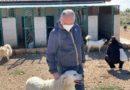 San Giovanni Rotondo, cala drasticamente il numero di cani presenti nel canile comunale
