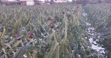 Ondata di gelo in Capitanata, l'impegno del consigliere regionale Sergio Clemente